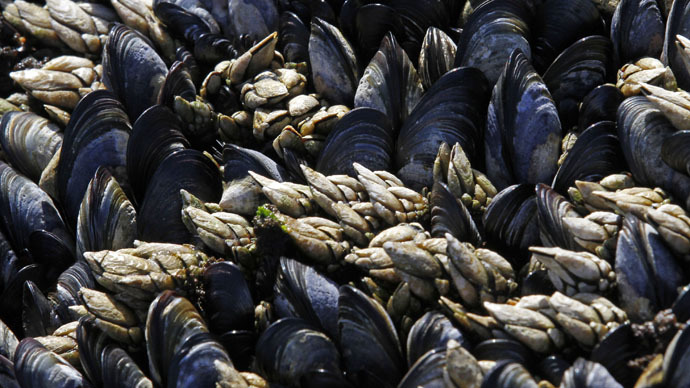 Oysters, crabs & clams under threat from CO2 along East Coast – study