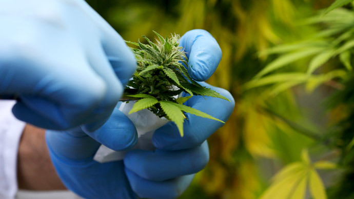 Kosher crop: Medical marijuana may get Orthodox Jewish approval in NY State