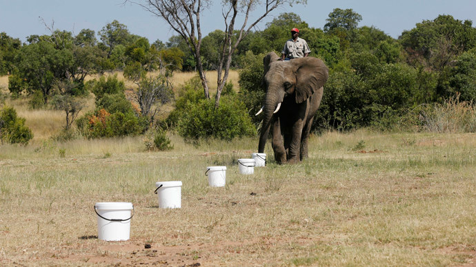 Trunk detective: Sniffer elephants trained by US Army to detect landmines