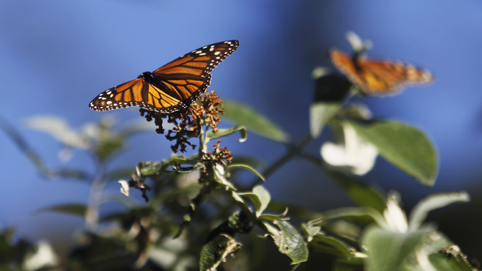 EPA sued over shrinking monarch butterfly population