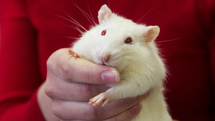You scratch my back: Rats recognize kindness, repay favors