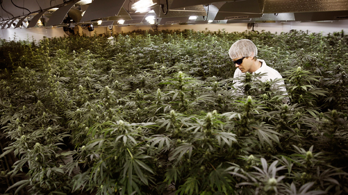 Stoned rabbits a concern for DEA as Utah debates medical marijuana bill