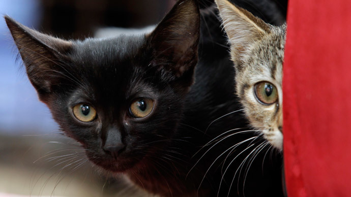 Pet detective! Father pays private sleuth £10k to investigate daughter's slain kitten