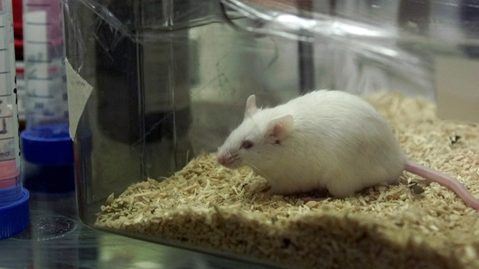 Alzheimer's breakthrough? Scientists use ultrasound to restore memory in mice