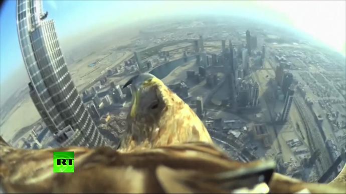 Eagle's eye view: Cam-equipped bird flies off Dubai skyscraper, sets world record (VIDEO)