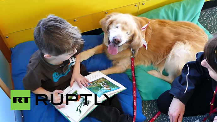Blind golden retriever Smiley helps autistic kids to learn (VIDEO)