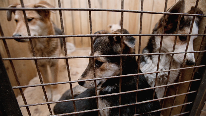 MP advocates tougher penalties for animal cruelty