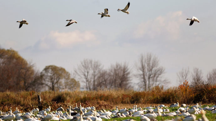 2,000 dead snow geese 'basically… just fell out of the sky' in Idaho