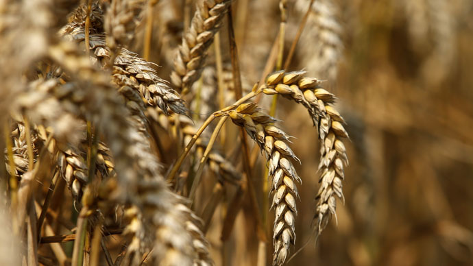 Monsanto settles 7 lawsuits after 2013 GMO-wheat scare