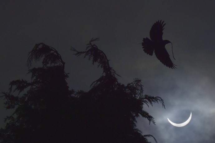 A bird carries a twig as it flies, with a partial solar eclipse seen behind, near Bridgwater, in south western England, March 20, 2015. Reuters / Toby Melville