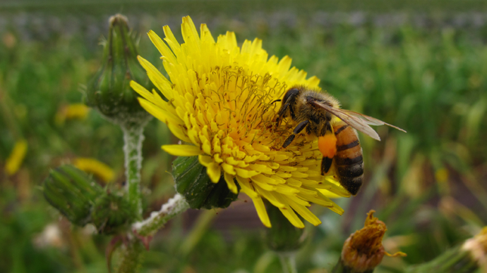 Buzzing off! 1 in 10 wild bees faces extinction in Europe, study warns