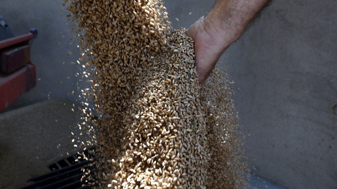 Gluten-free wheat? Research aims to create new grains amid rise of celiac disease