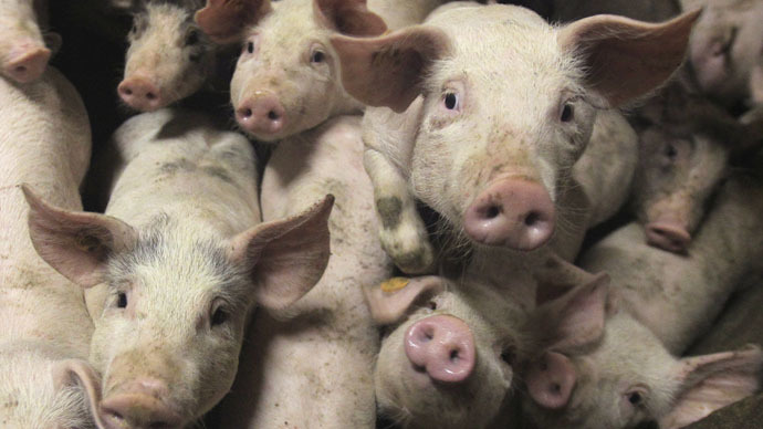 Meat demand sparks dramatic rise in antibiotic use – report