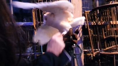 ​'Stay magical, not cruel!' Harry Potter owls mistreated at Warner studio tour, PETA says
