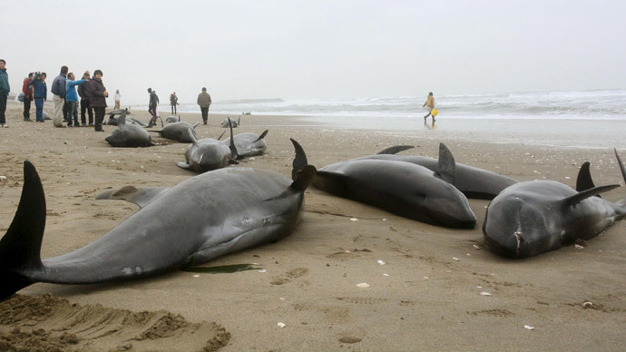 150 dolphins feared dead after mass beaching in Japan (PHOTOS, VIDEO)