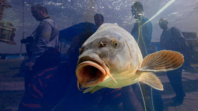 Fluke treatment kills many fish at Texas aquarium