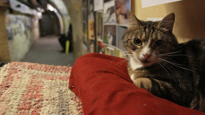 Fluffy troops: Hermitage gives away members of historic 'cat guard' (VIDEO)