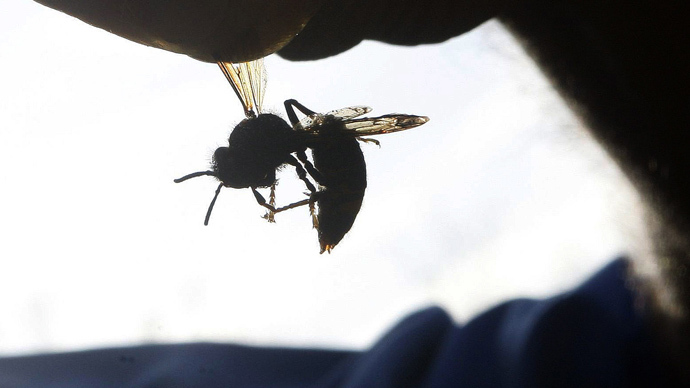​Bee-ware: 'Very aggressive, deadly' Asian hornets may be headed for UK