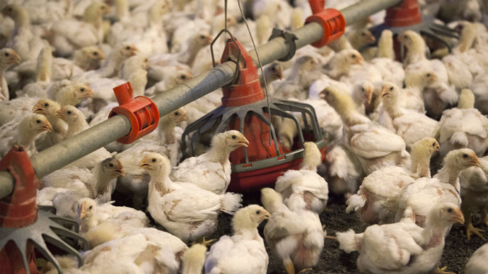 Chicken cull: 5.3mn hens to be slaughtered as huge bird flu outbreak reported in Iowa