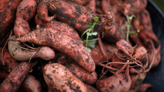 Mother Nature's genetic engineering? Sweet potato naturally 'modified,' researchers say