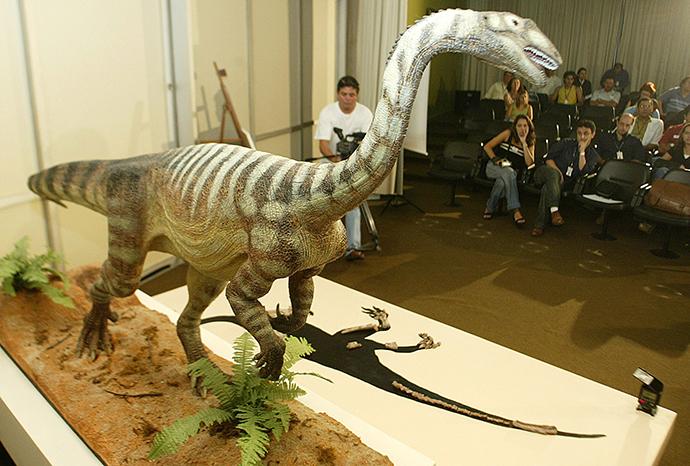 A model of the herbivore dinosaur called the Unaysaurus tolentinoi (Reuters / Bruno Domingos)