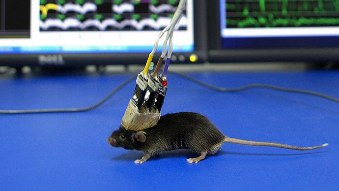 ​Hunger games: Scientists manipulate gluttony & food cravings in mice