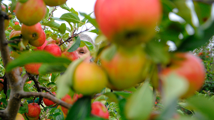 Russia to limit apple imports from Serbia