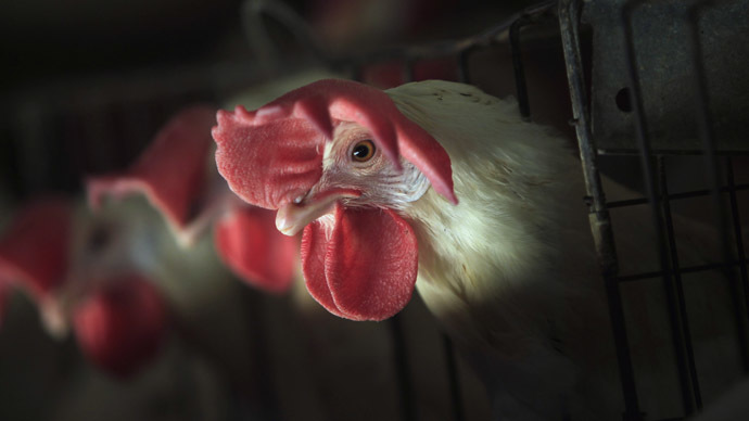 Birdemic: Iowa becomes 3rd state to declare emergency over avian flu outbreak