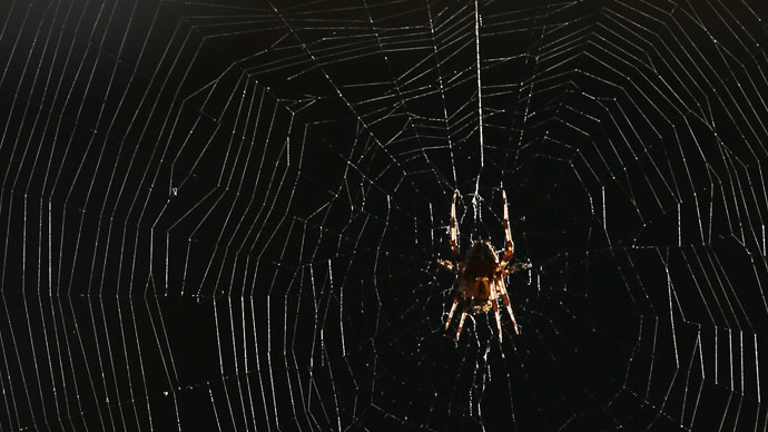 Watch out Peter Parker! Spiders spin graphene 'super silk' in Italian lab