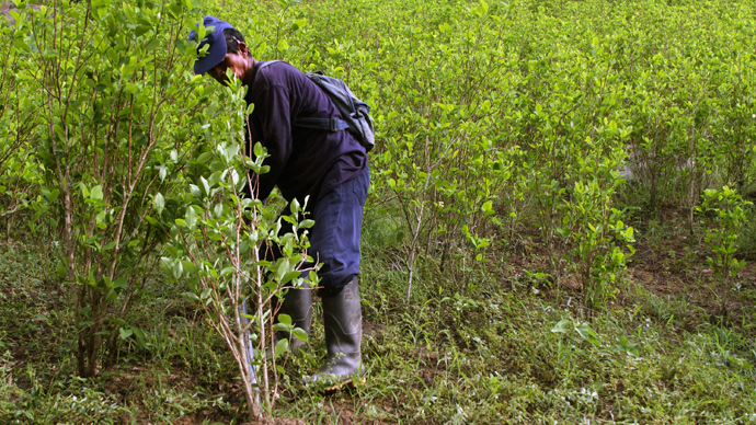 Colombia plans to eradicate Monsanto weed killer in drug war