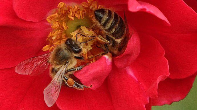 40 percent of US honeybee population lost over year, as mysterious die-off accelerates