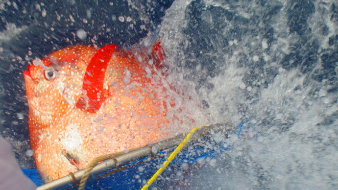 Deep-water hunter first among fish to have warm blood