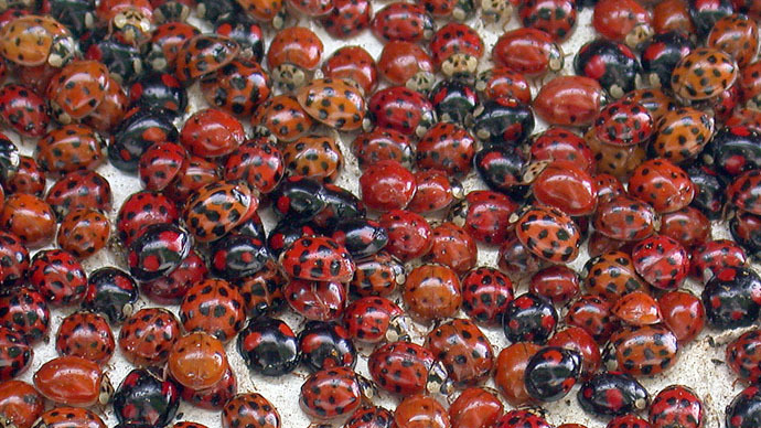 Students release 72k ladybugs in school for senior prank, face criminal charges
