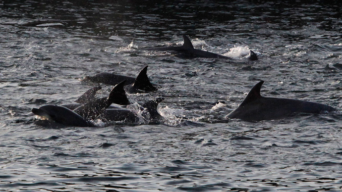 Japanese fishermen vow 'to never stop' dolphin hunting