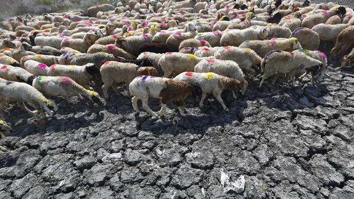 Asphalt melting: India heat wave kills over 1,400 people (PHOTOS)