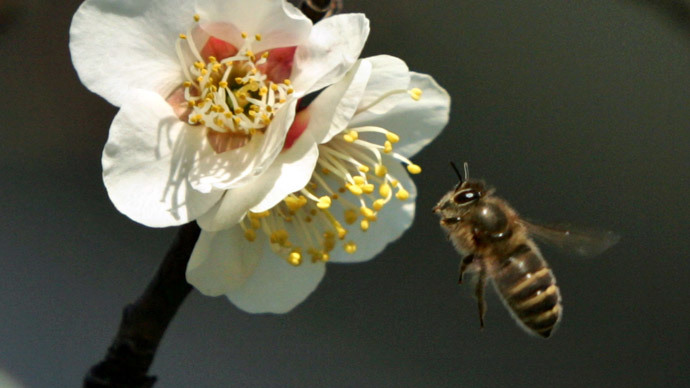 EPA wants 'pesticide-free zones' to curb honeybee deaths