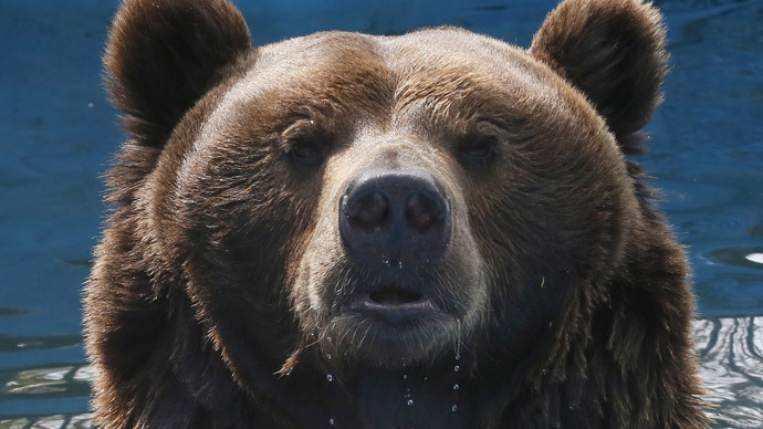 Warsaw police find bear-puncher in hospital after zoo enclosure foray