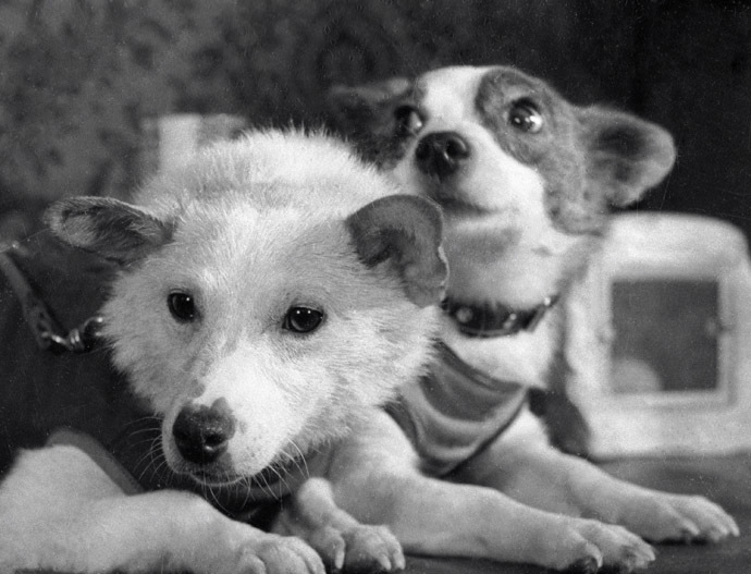 Dogs Belka (Squirrel) and Strelka (Little Arrow) after returning from space. (RIA Novosti)