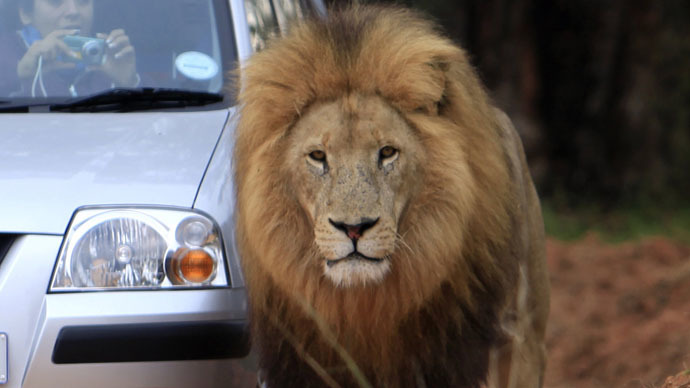 American woman killed by lion in S. Africa identified as 'Game of Thrones' editor