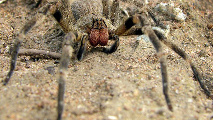 ​Eggs of world's deadliest spider found in English supermarket