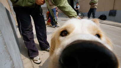 Guide dog throws itself in front of oncoming school bus to save blind owner