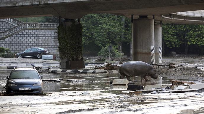 Georgian capital flood: 12 killed, zoo animals escape, several shot dead (PHOTOS, VIDEO)
