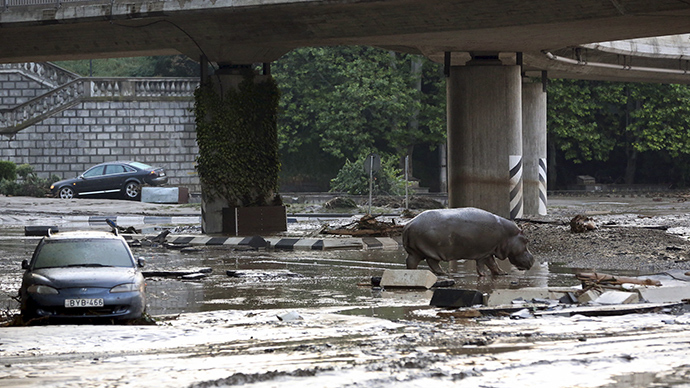Georgian capital flood: 12 killed, zoo animals escape, several shot dead (PHOTOS, VIDEO)