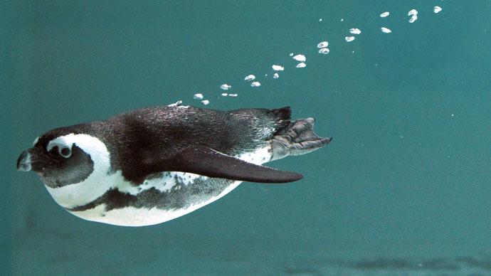 Lucky escape: Penguin flees deadly Tbilisi floods, makes 60km trip to Azeri border
