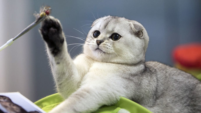 Watch more cat videos on internet to be happy – study