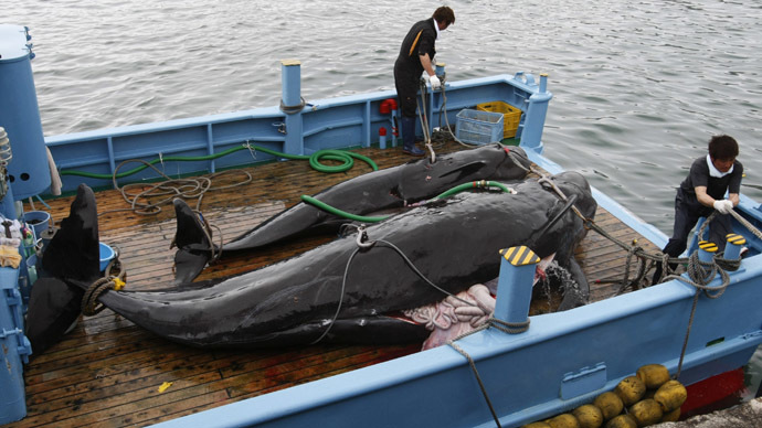 Japan to resume whale hunt in Antarctic this year