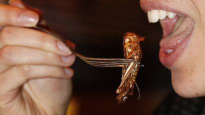 'No dessert until you eat your cricket': Insects set to enter menus after EU ruling