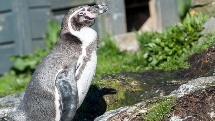Penguin missing from flood-ravaged Tbilisi Zoo found hiding in debris
