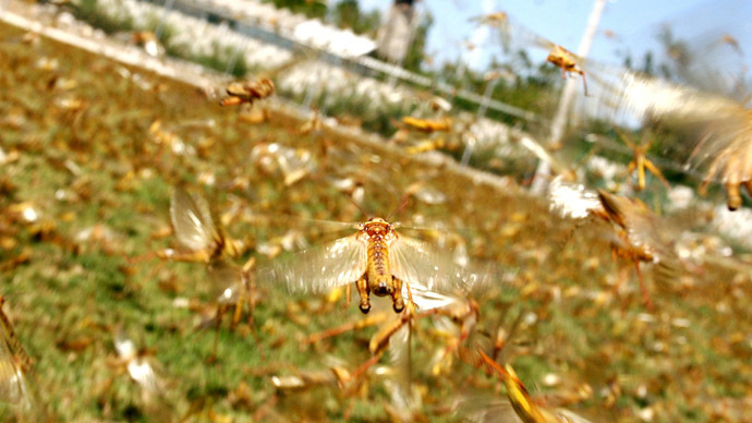 Plague of Astrakhan: Locust swarm blots out the sun in Russian region (VIDEO)
