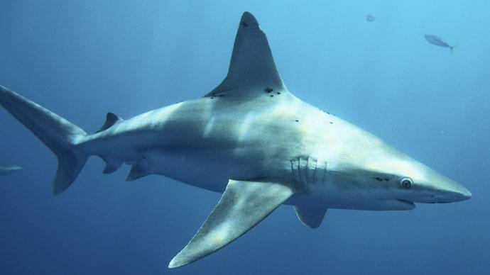 Shark attacks 8-year-old boy at North Carolina beach